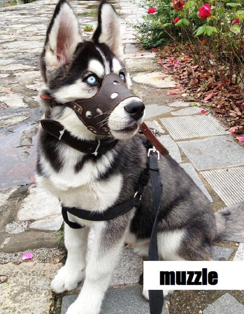 Top Quality Leather Dog Muzzle Anti Bite Dog Pet Pets Dog