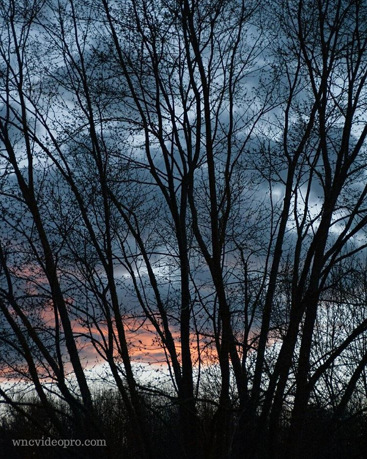 A freshly budding maple tree silhouetted against a colorful sunset in Asheville, North Carolina. #maple #silhouette #sunset #blueridgemountains #asheville #nc