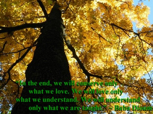 In the end we will conserve only what we love We will love