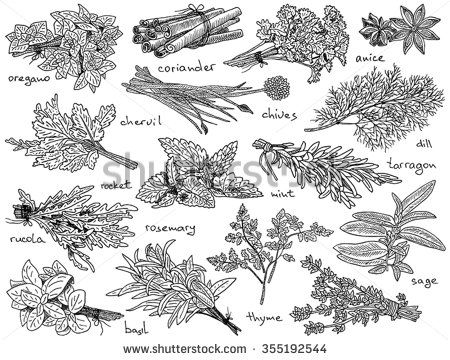 herbs coloring pages - photo#18
