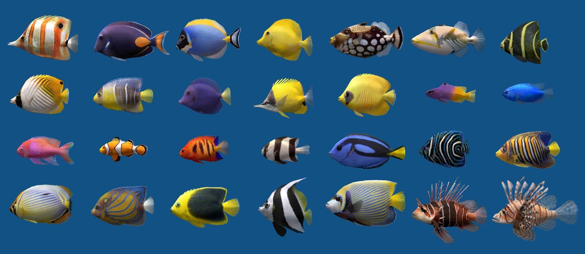 Saltwater Aquarium Fish Chart Marine Aquarium Fish Saltwater Aquarium Fish Marine Aquarium