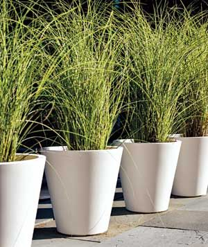 create a kind of living fence by lining up tall potted grasses along a walkway or - Tall Potted Plants