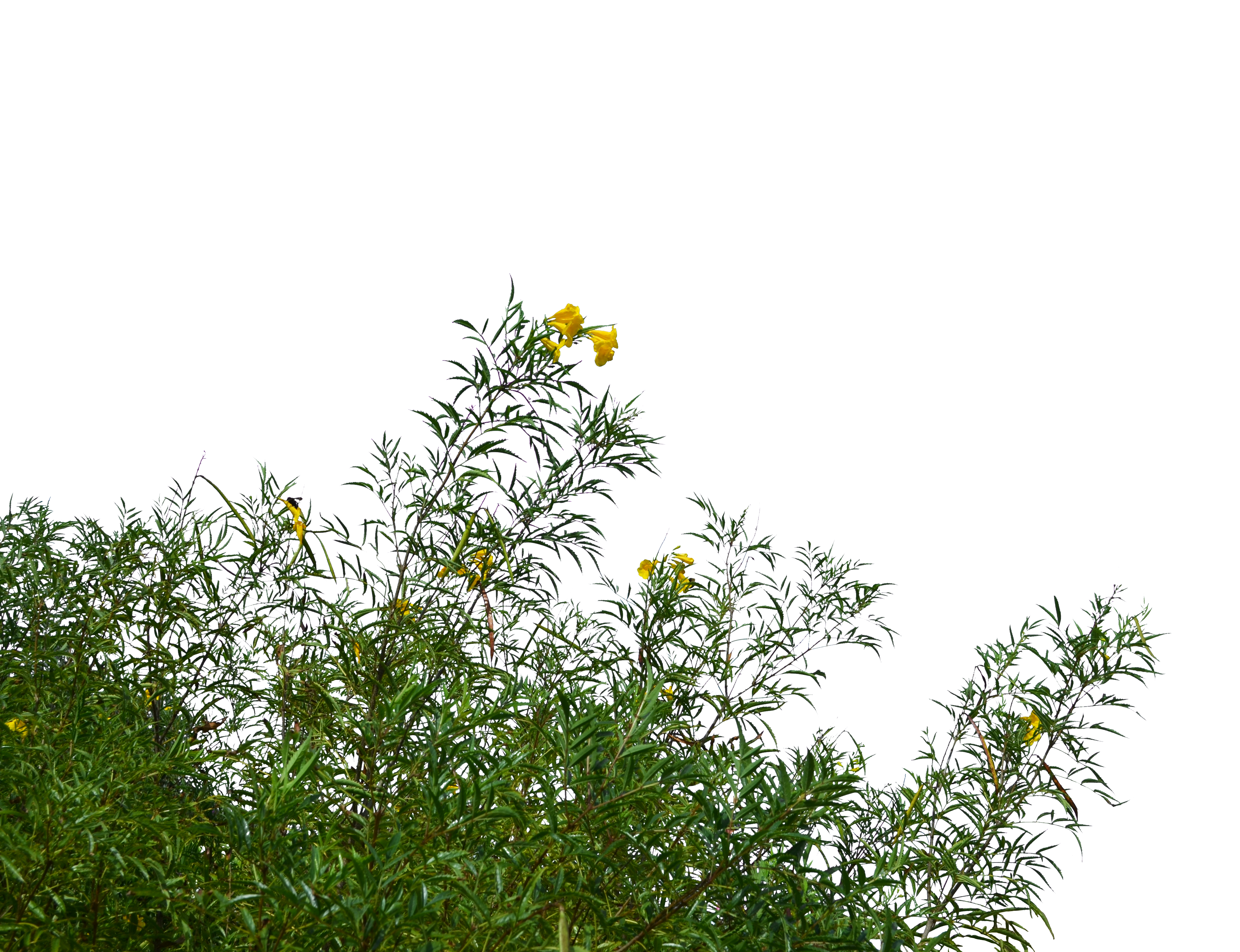 Wild Flowers and Grass PNG Stock Photo 0183 cc2 by