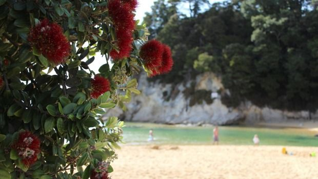 Kaiteriteri is quite well known but the golden sands of Little Kaiteriteri are not.