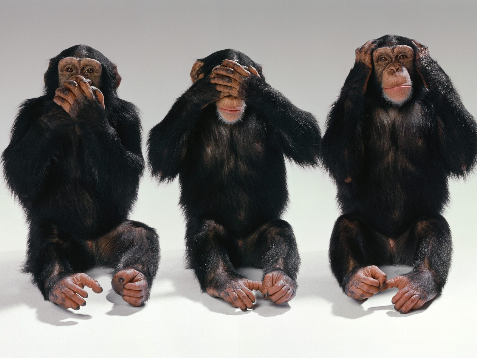 Attention Individuals Who Yearn To Define Their Life Purpose And Live It Finally A Proven Technique For I Monkeys Funny Three Wise Monkeys Monkey Wallpaper