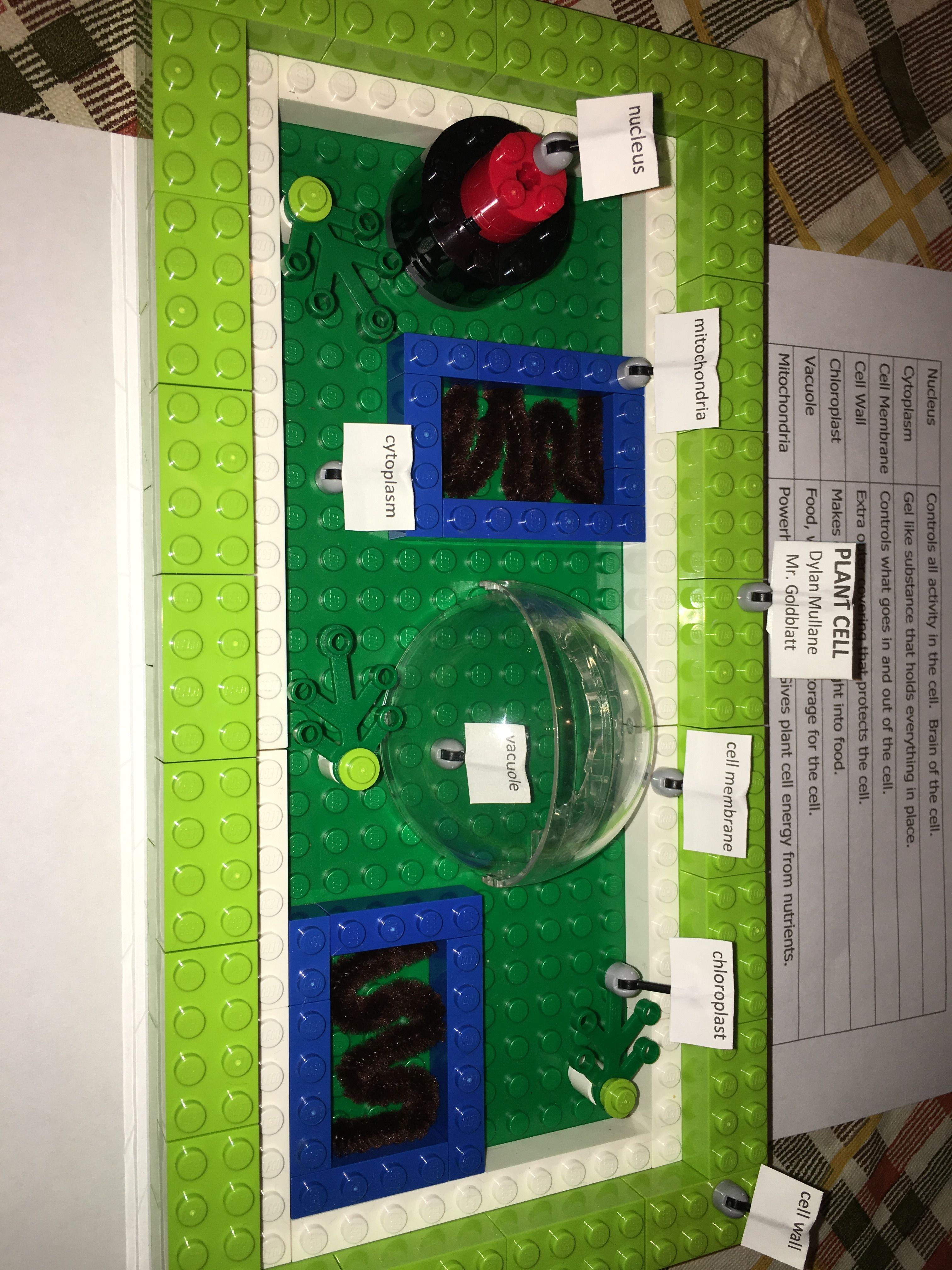 Pin By Tara Ostermann On Big Project Ideas Cell Model Plant 3d Diagram Not Labeled Teaching Parts Of A