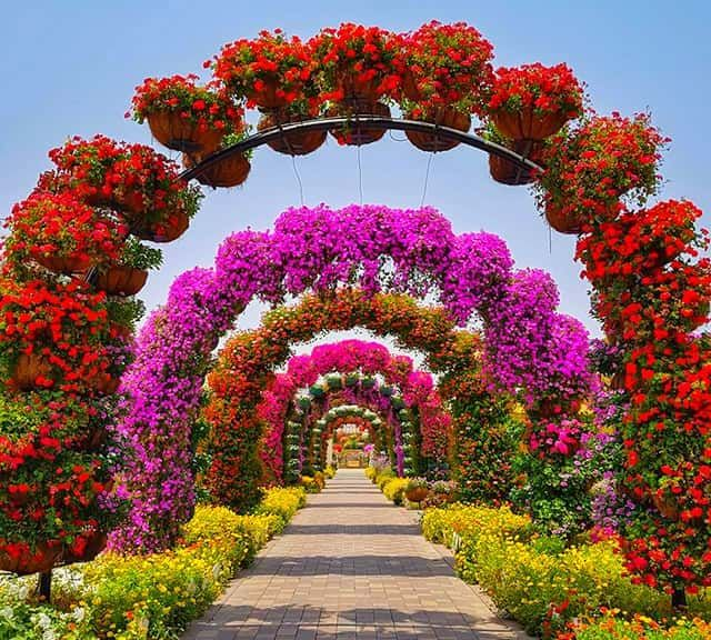 12 Amazing Facts about Dubai Miracle Garden | Miracle ...