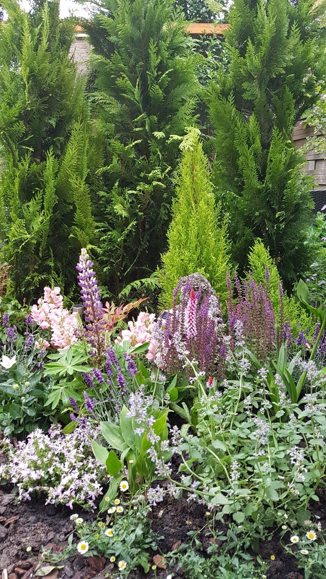 In De Border Staan Bloemen Die Insecten Trekken, Zoals Lavendel,