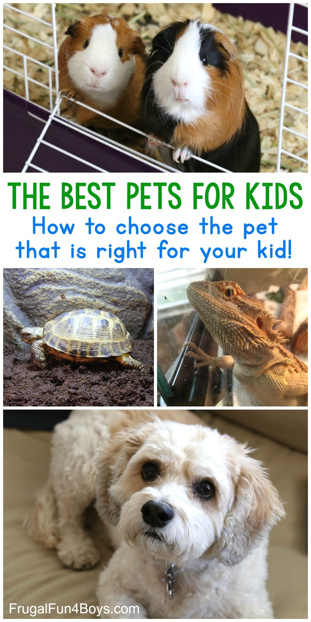 The Best Pets For Kids Choose The Best Pet For Your Child Best Pets For Kids Animals For Kids Pets