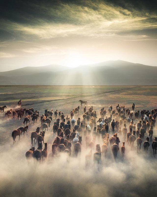 Kayseri Map%0A Wild horses in Kayseri  Turkey  Cuma   evik