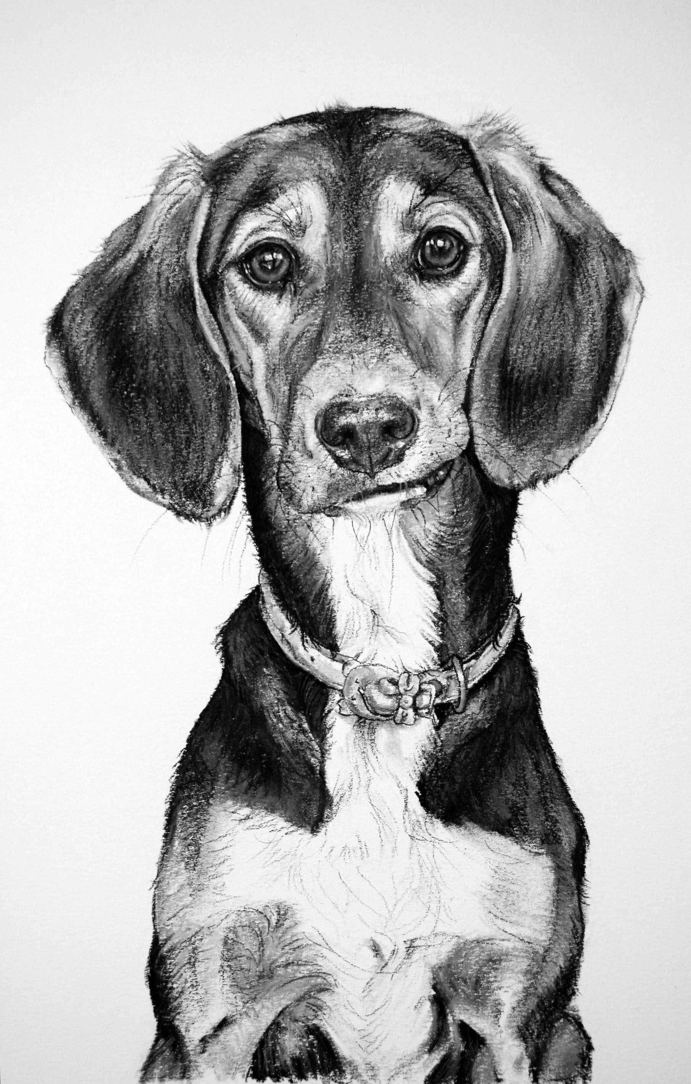 ней картинки рисовать собак карандашом сделанные своими руками