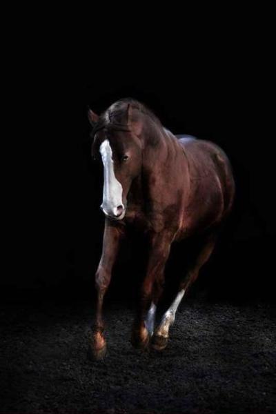 Western RB auf zuverlässigem Quarter Horse Hengst