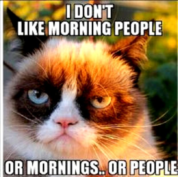 Grumpy Cat Quote Humor Meme Grumpycat Meme Grumpy Cat Quotes Funny Good Morning Memes Grumpy Cat