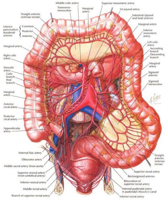 Pin de Elke Zehl en Verdauung | Pinterest | Anatomía, Medicina y ...