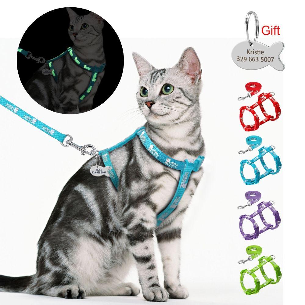 Cat S Luminous Harness And Leash Set Price 34 99 Free Shipping Petsbasics Cat Harness Kitten Harness Cat Leash