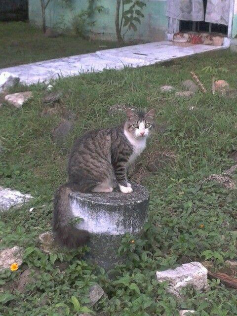 Gato sobre madero