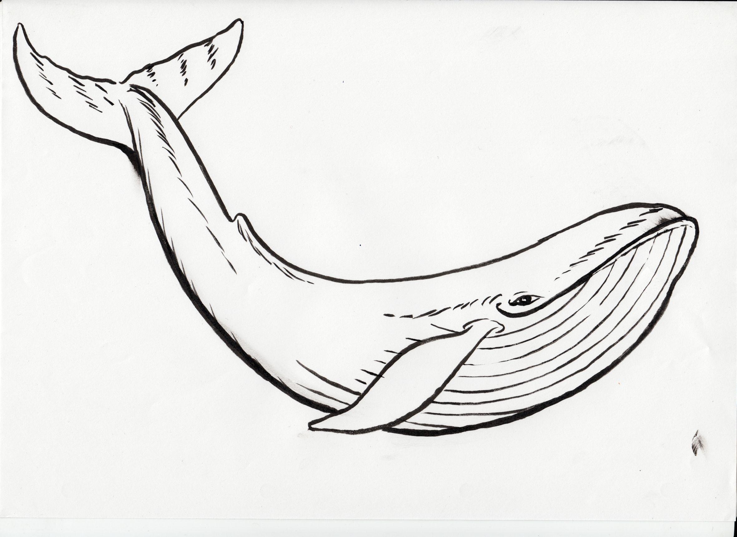 Un dibujo para niños de una ballena azul | Actividades Toddlers ...