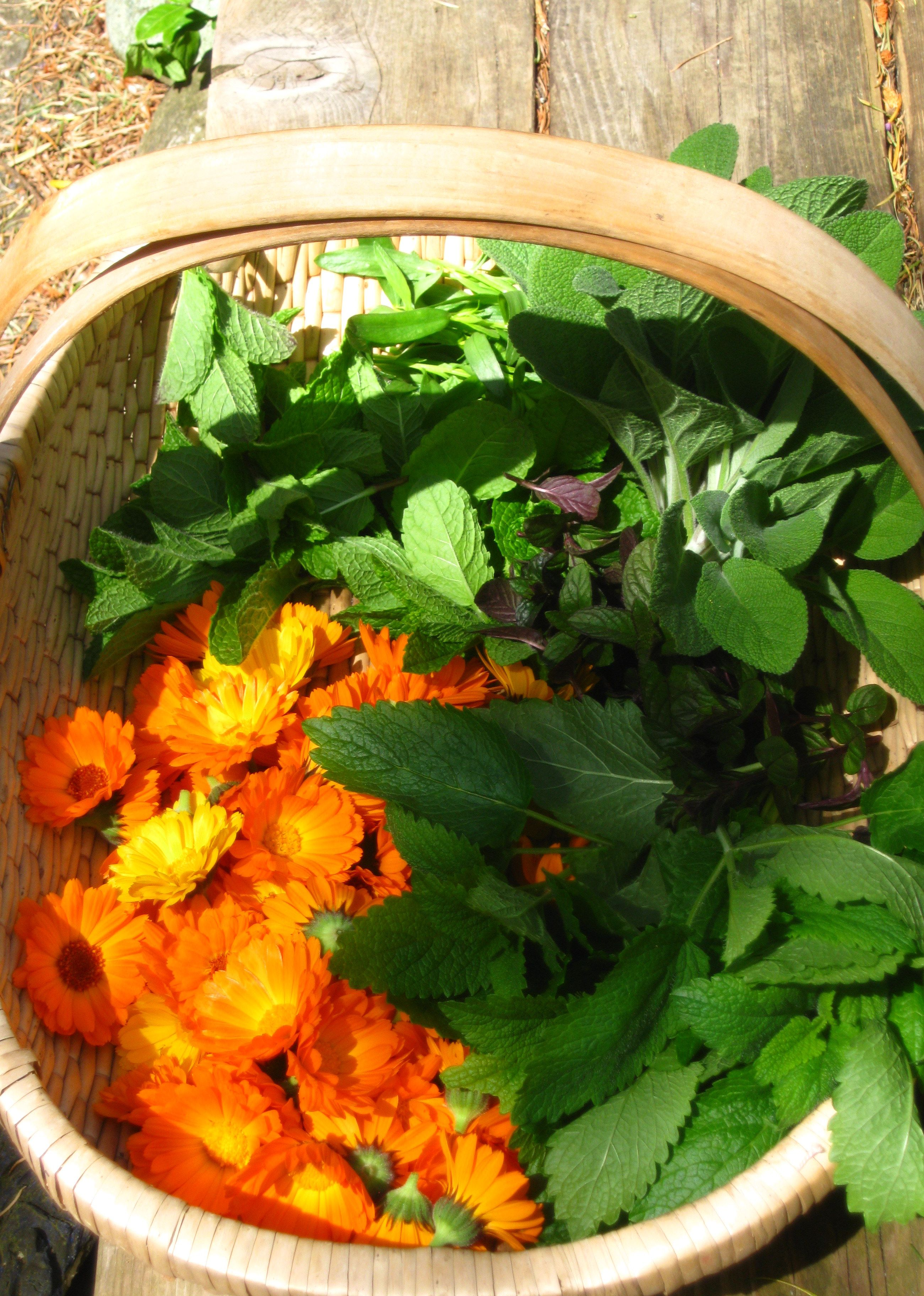 Herbs from the garden for drying.  calendula, sage, mint, and tarragon