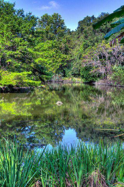 Kanapaha Botanical Gardens In #Gainesville #Florida