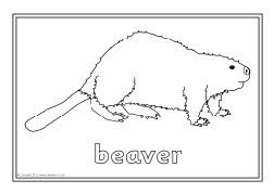 North American Animals Colouring Sheets Sb9074 Sparklebox