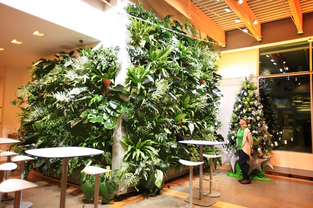 benefits with images indoor plant wall house plants on indoor herb garden diy apartments living walls id=56413