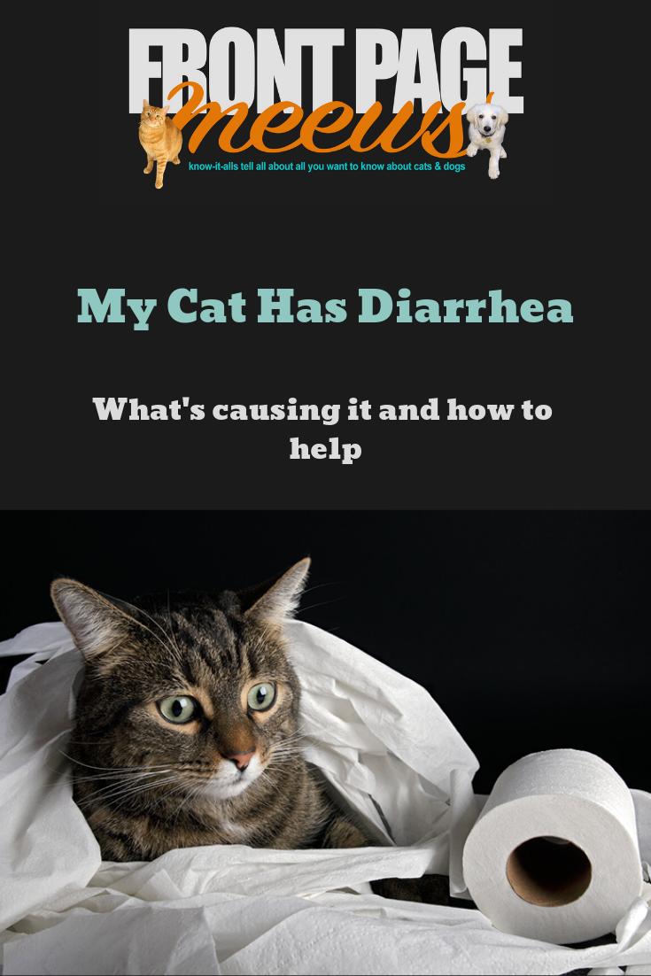 My Cat Has Diarrhea Cat Health Cat Parenting Cat Diarrhea