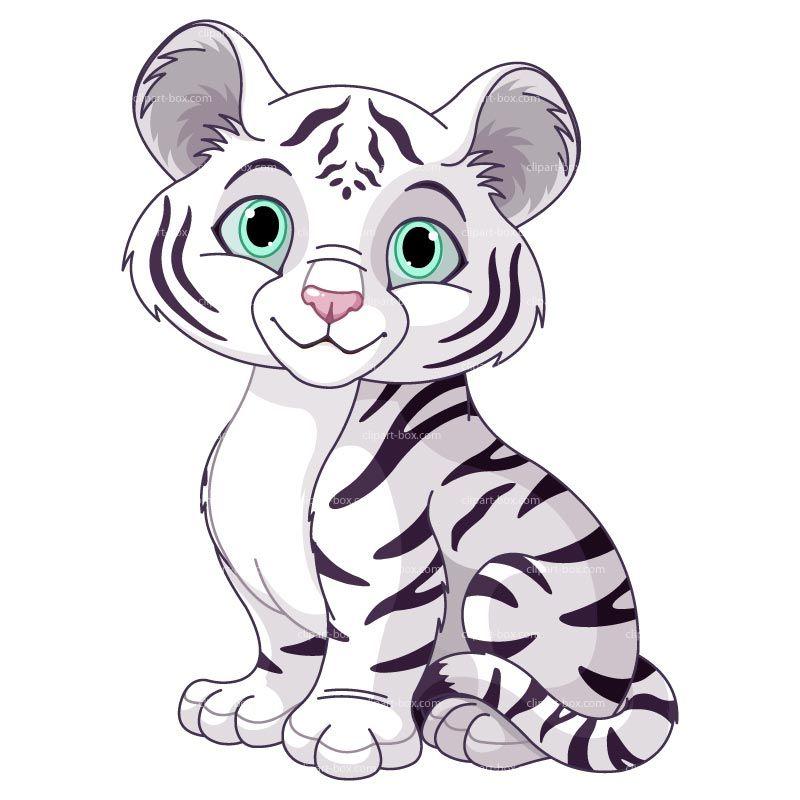 Tigre Blanco S Izobrazheniyami Risunki Zhivotnyh Illyustracii