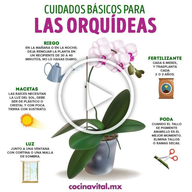 Mantén En Perfecto Estado Estas Lindas Y Costosas Plantas Para Mantener Cuidadas Tus Orquídeas Aquí Te Damos Algunos Ti In 2020 Garden Design Garden Decor Diy Decor