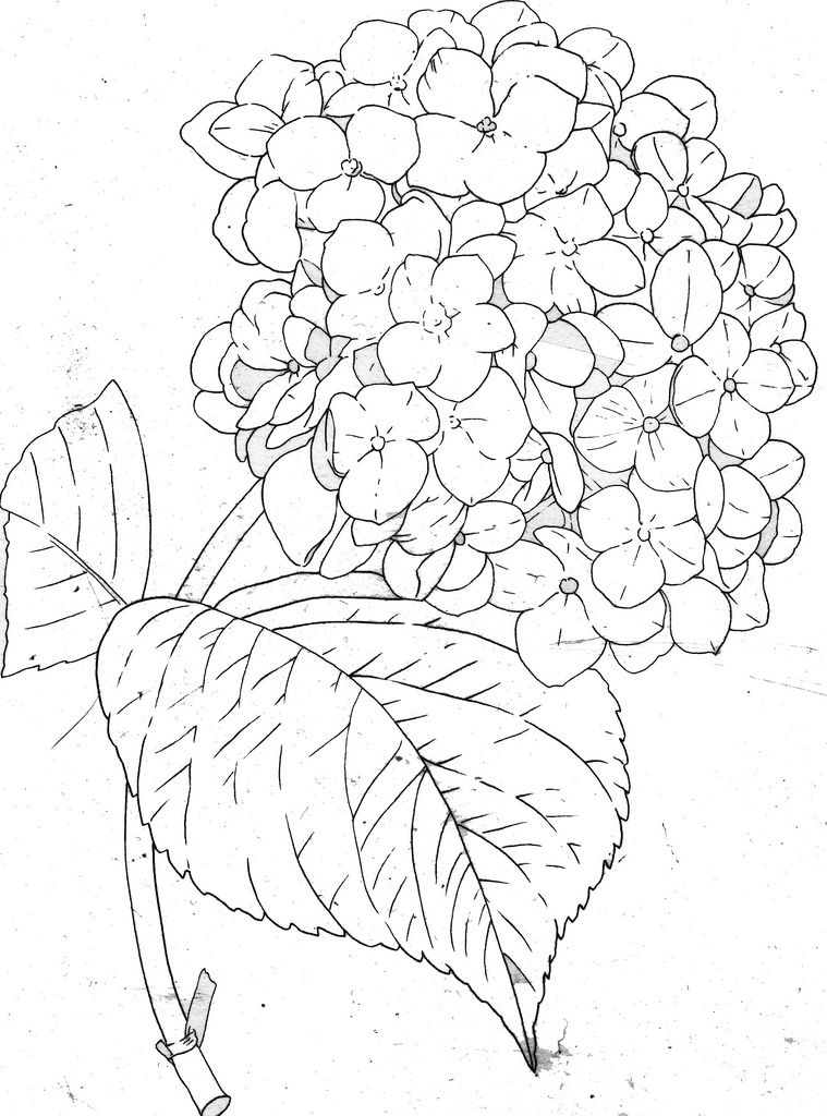 Hydrangea Line Fabric Painting Flower Drawing Drawings
