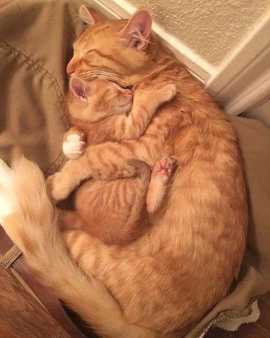 Cute Cats Of Instagram On Instagram Mom And Her Baby Kitty Cats Kitten Kittens Kedi Katze Cute Cats And Kittens Cat Sleeping Baby Animals