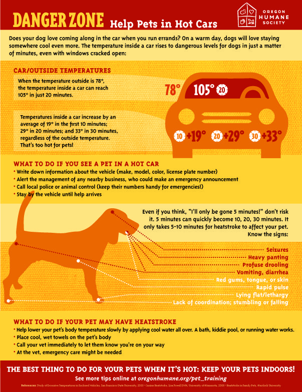 It S Getting Hot Out There Keep Pets Safe From Heat Stroke Infographic Carsafety Dog Care Tips Pets Dog Training Obedience