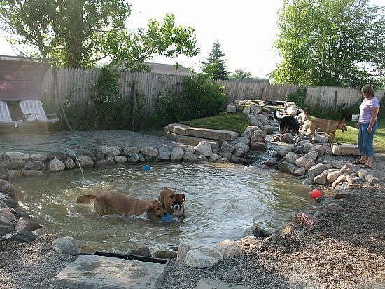 Ponds And Waterfalls Dog Playground Dog Friendly Backyard Dog