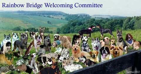 Rainbow Bridge Welcoming Committee Dog Heaven Rainbow Bridge Rainbow Bridge Dog