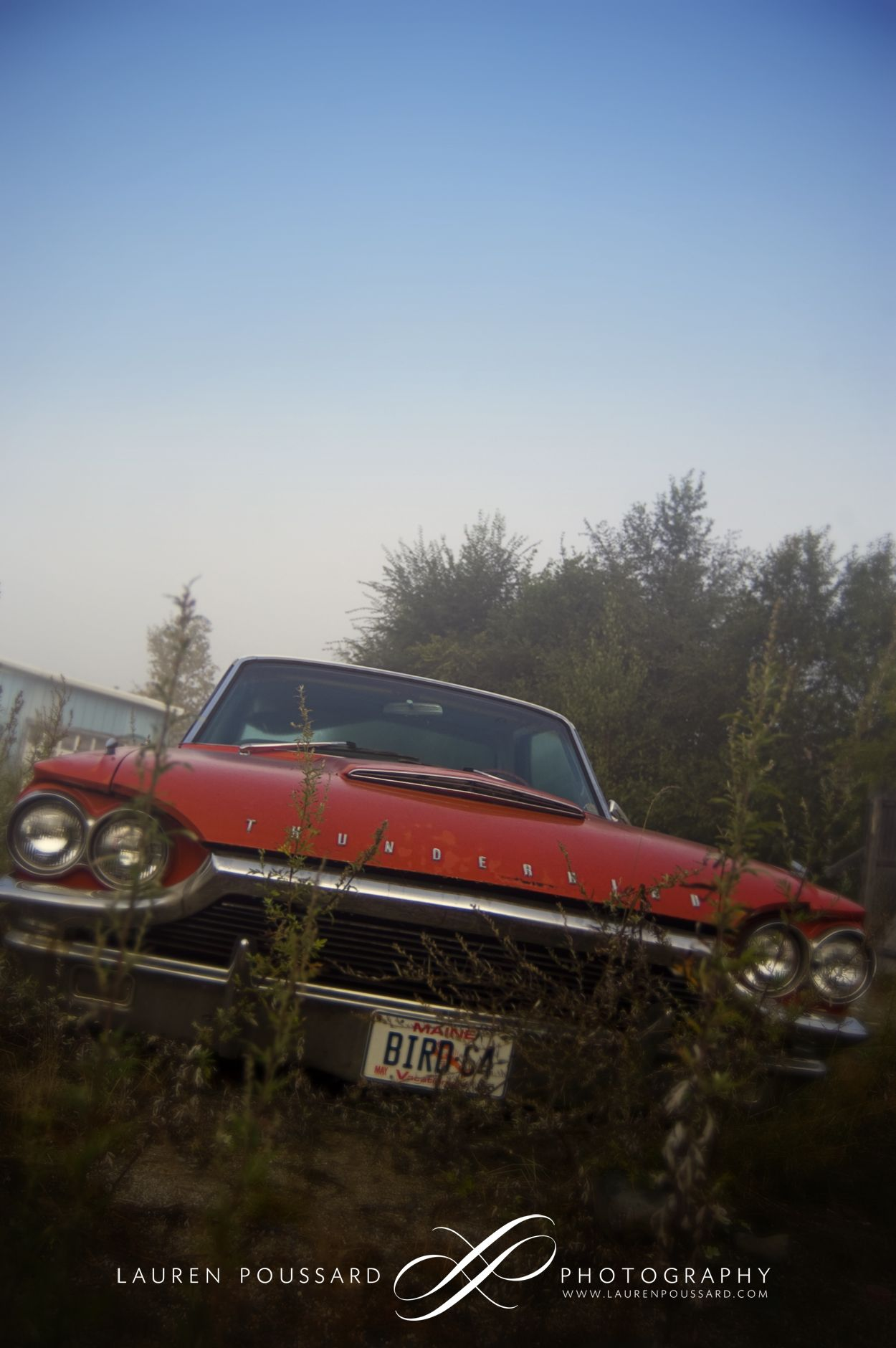 a 64 t-bird I found once in an overgrown lot.