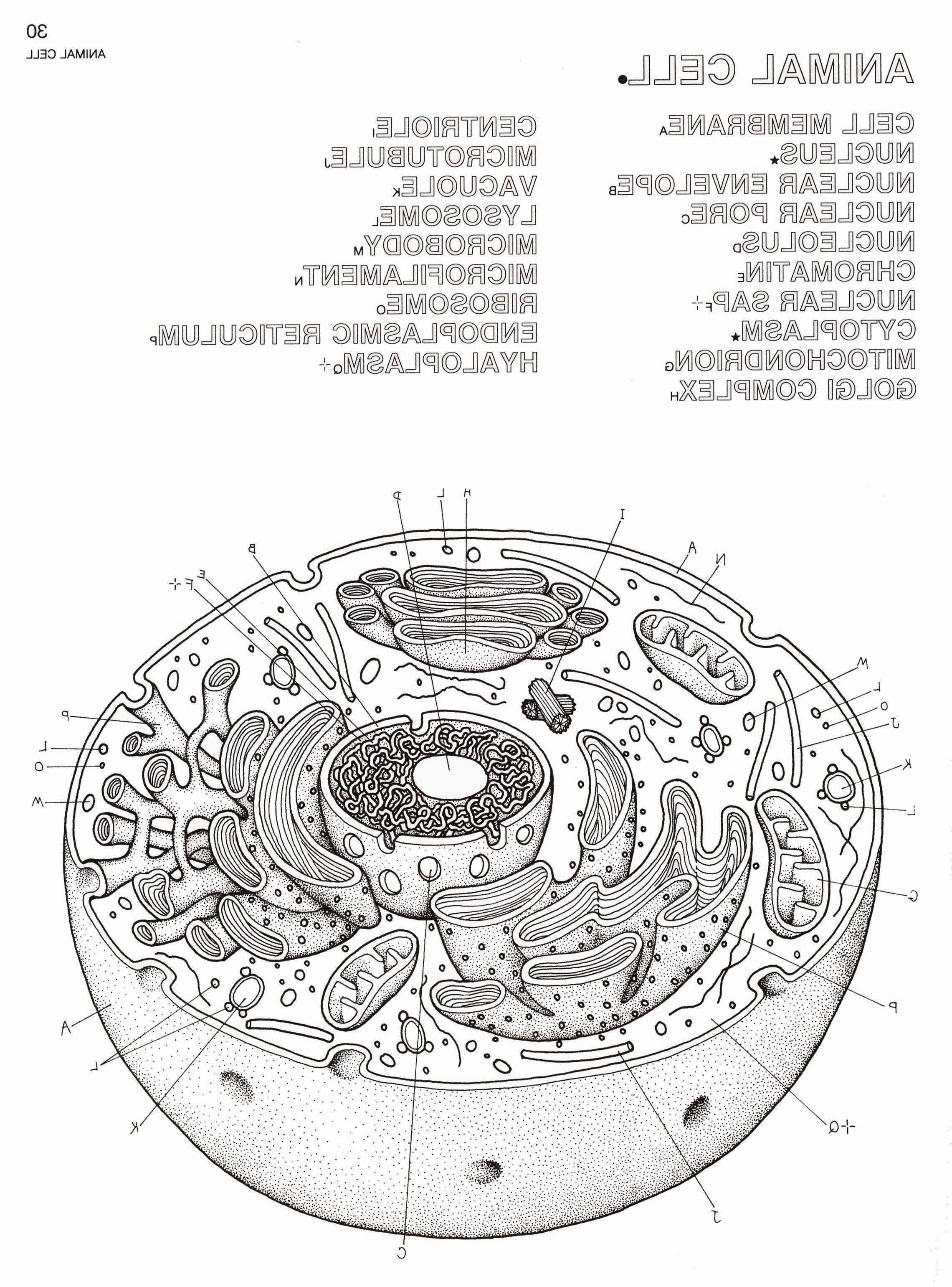 22++ Parts of a cell coloring page download HD