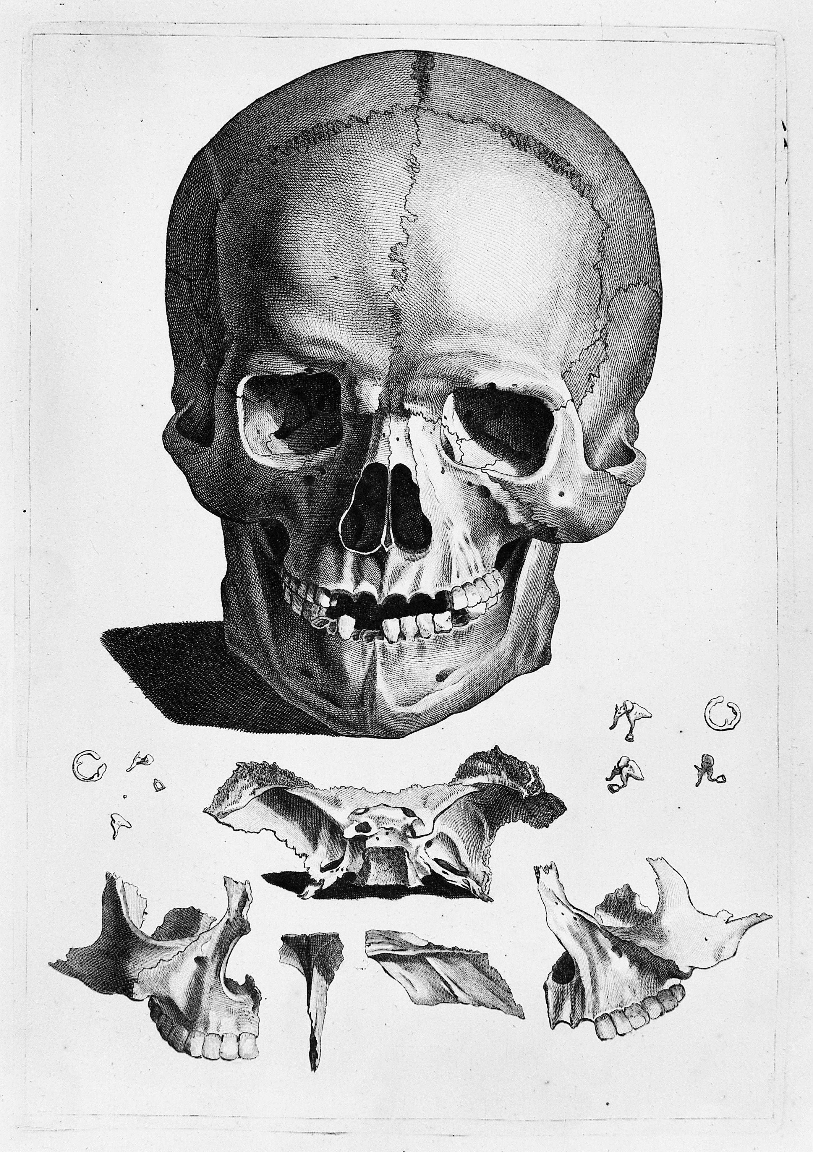 Human Skull And Jawbone Illustrations Bones Illustration Skull