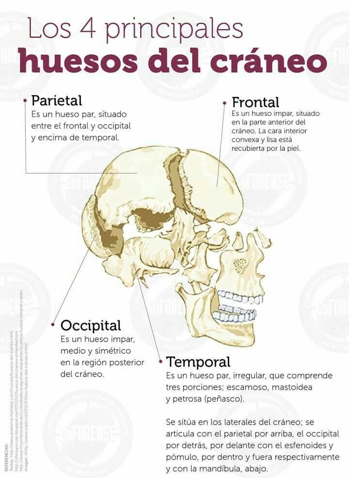 Atractivo Erguida La Anatomía Fila Regalo - Anatomía de Las ...