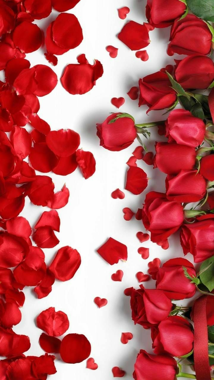 A Line Of Roses And Petals Valentines Wallpaper Red Roses Wallpaper Rose Flower Wallpaper
