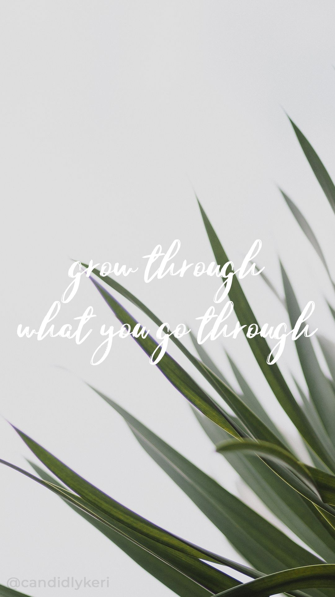 you grow through what you go through palms greenery typography