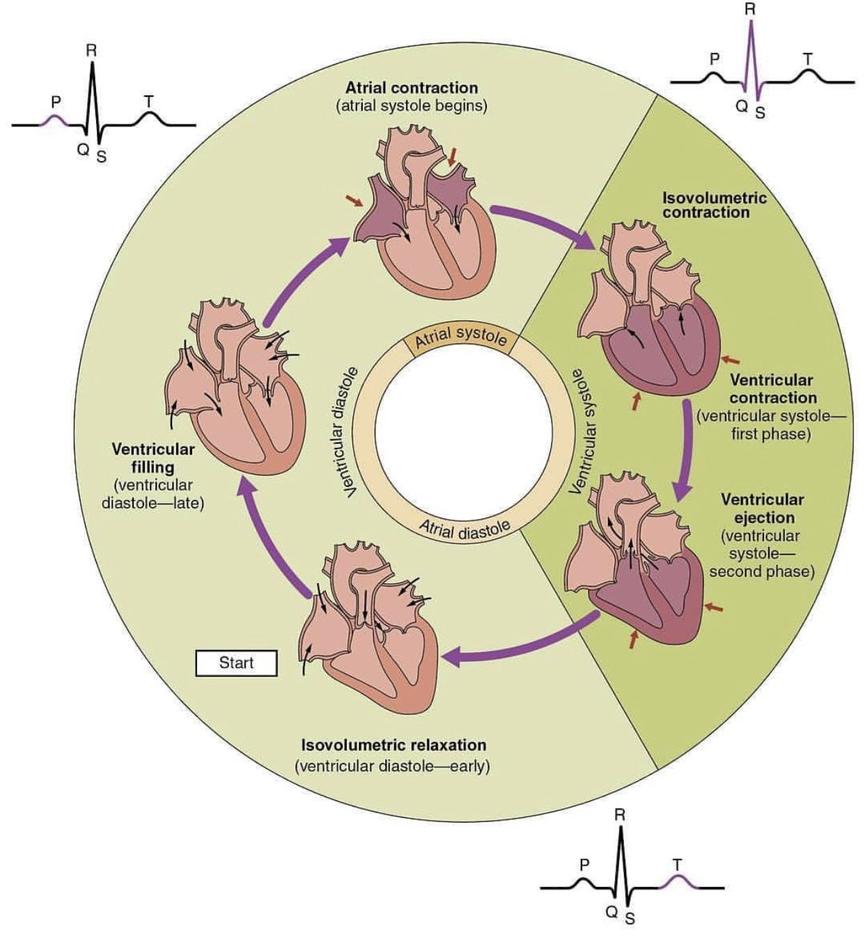 Pin By Andres Sanchez On Cardiology In
