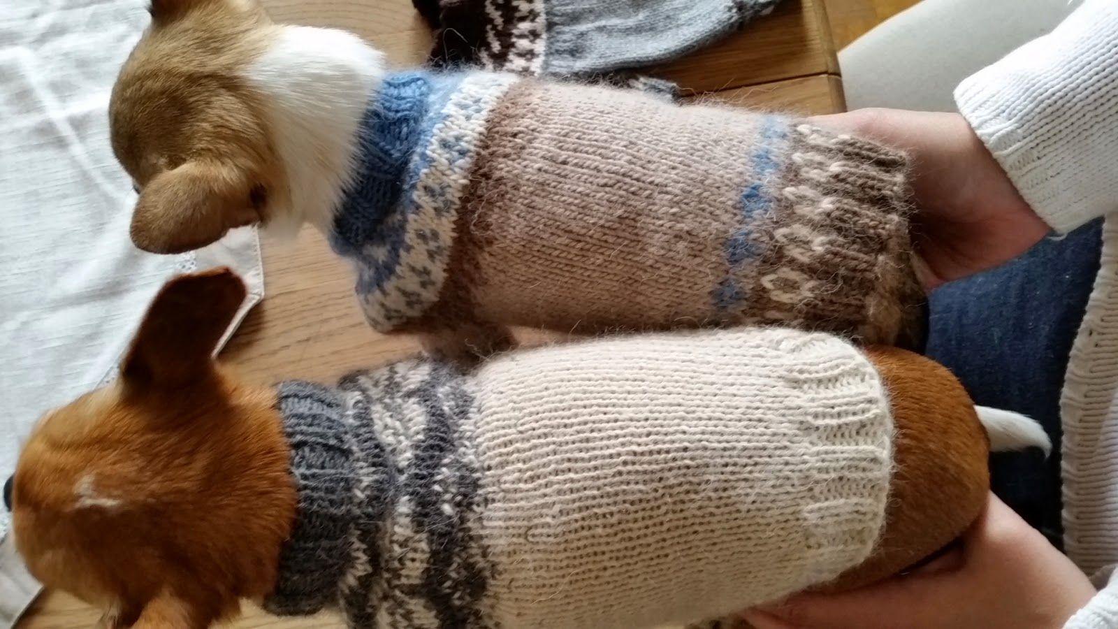 Satumaisia Silmukoita Neule Koiralle Ohje Koira Koiran Vaatteita Neuleet
