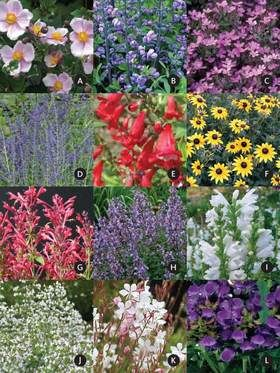 Pollinator Garden (Pre Planned Garden Design) This Collection Provides  Nectar Sources To Support