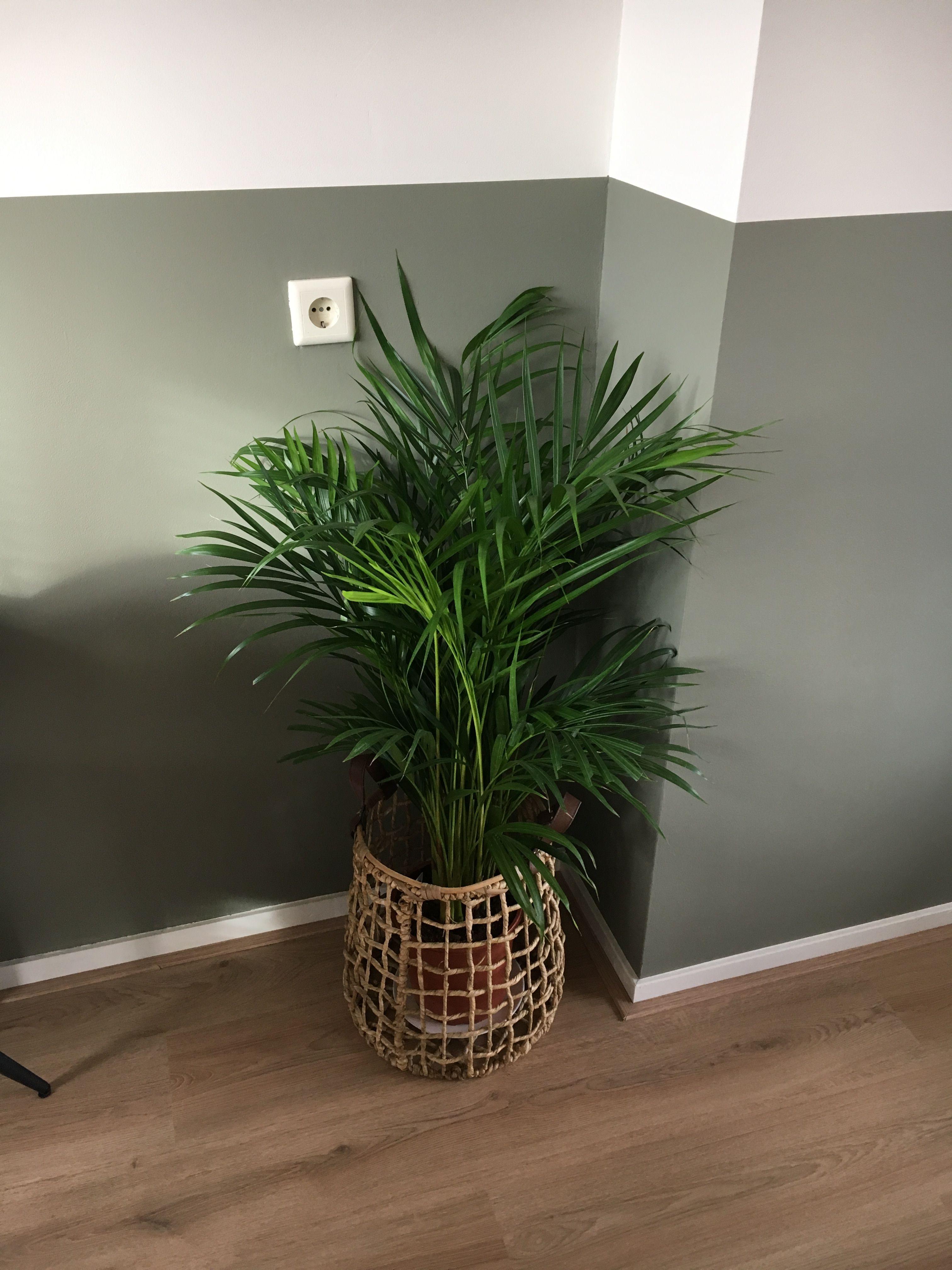 Photo of #groeninhuis #groenevingers #palm #lambrisering #canouflagegreen