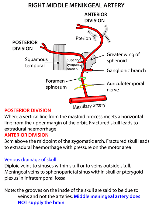 Instant Anatomy - Head and Neck - Vessels - Arteries - Middle ...