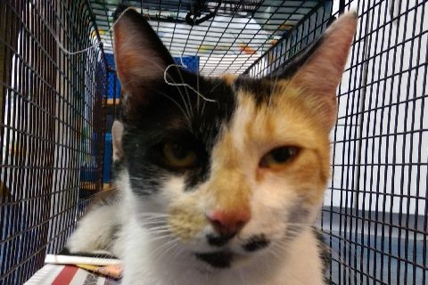Dee Dee | Pets Available | PAWS Chicago