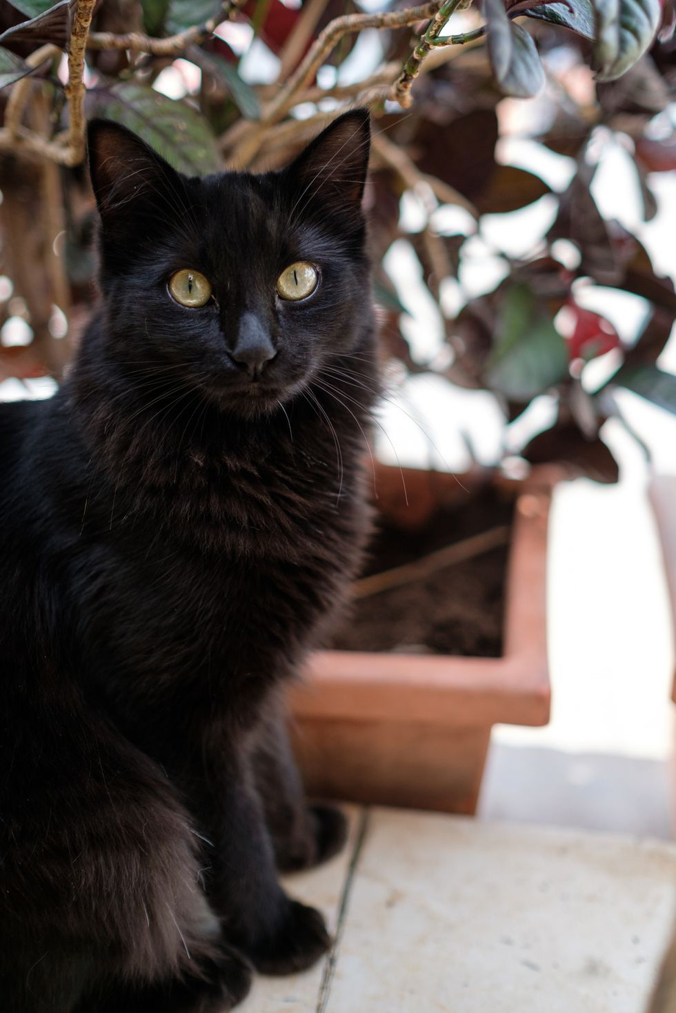 20 Black Cat Names for Your Spooky or Sweet Feline Cat