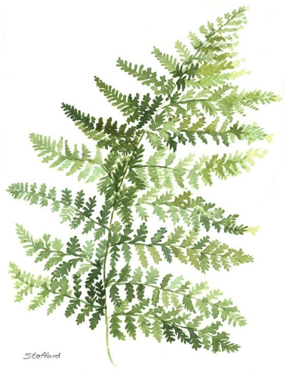 Fern print by nataliestafford on Etsy, $20.00