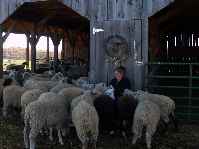 Debby Rapp from Holler Farm--where our beautiful fleece comes from!