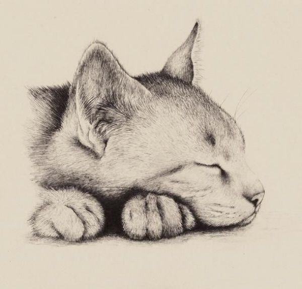 Dumbfounding Beste Bleistiftskizzenzeichnungen zum Üben von #CatDrawing #pencildrawings