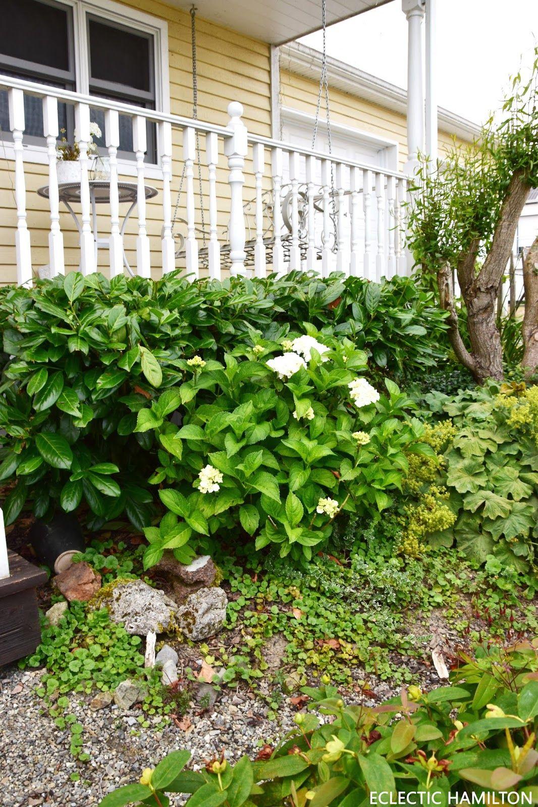 Der Kostenlose Dunger Fur Eure Pflanzen Kaffeesatz Dunger